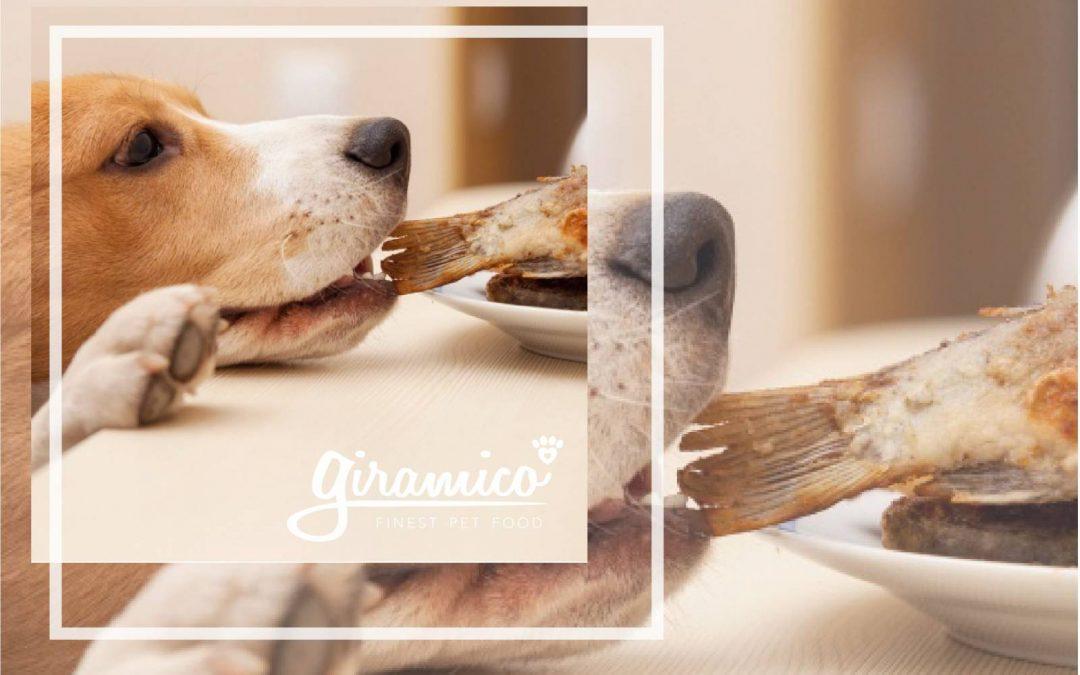 Il cane mangia a tavola come educarlo - Cane che mangia a tavola ...