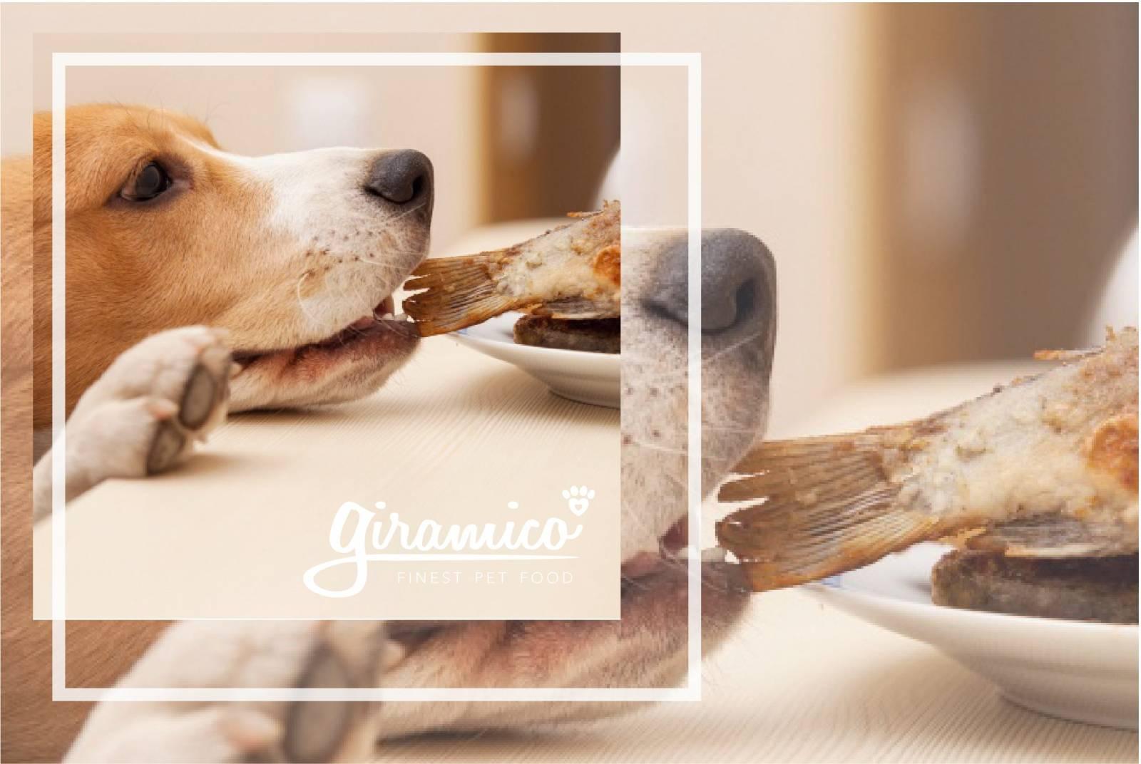cane-mangia-a-tavola