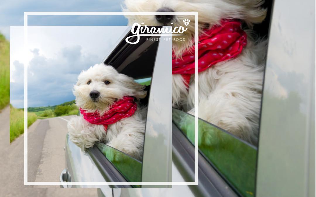 Ma il cane ama viaggiare?