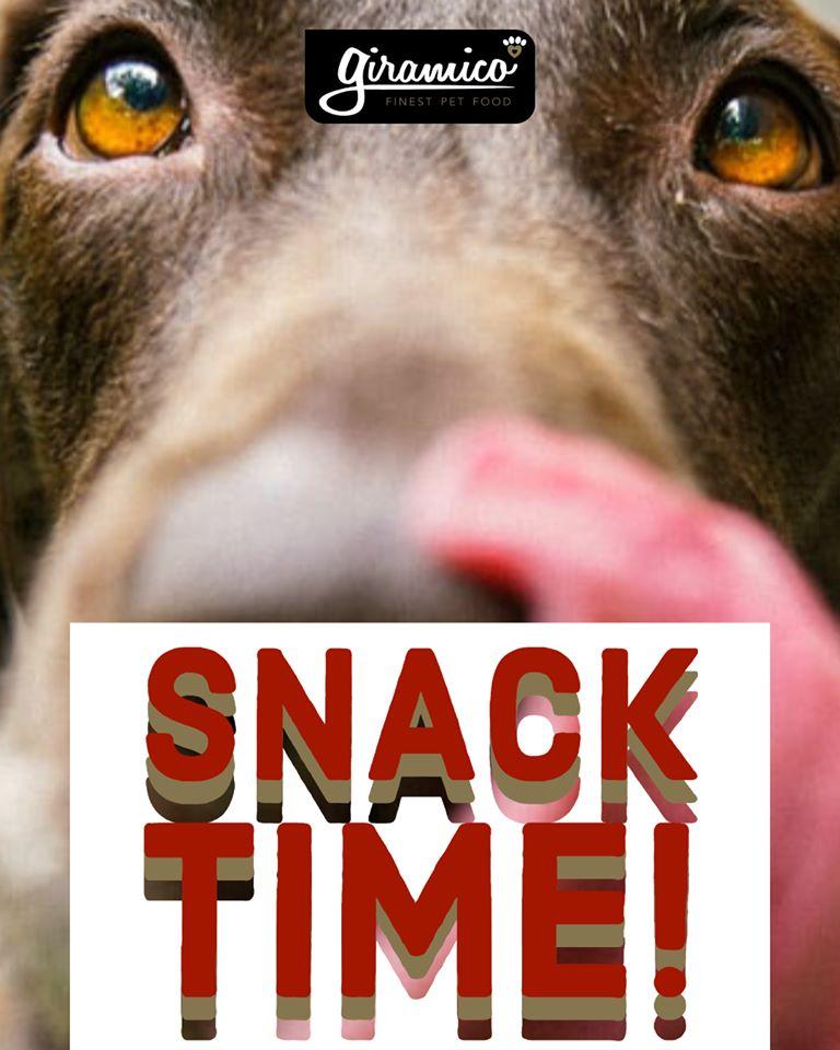 alimentazione cane fuori pasto